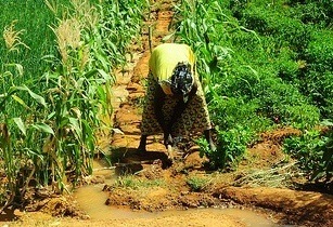 Africa agriculture