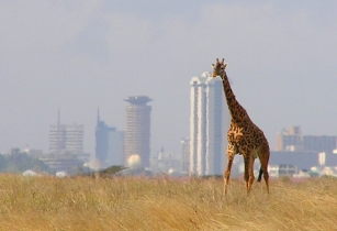 Africa Finance and Investment Forum 2017 to be hosted in Kenya for the first time