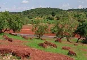 Sahel forest near Kayes Mali