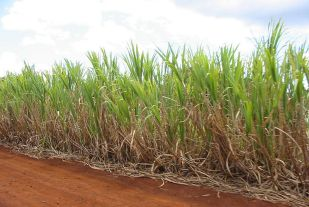 The Green Fuel plant makes anhydrous ethanol from sugar cane. (Image source: Wikimedia Commons)