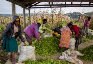 Increasing agri-business development in Ethiopia with the Agriculture Fast Track Fund
